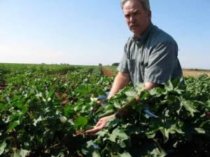 A cotton farmer in the field