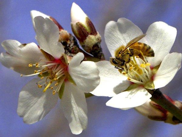 bees-6bb12f86c978790d3ce3f4f7c9fd448957f4461f-s1600-c85.jfif