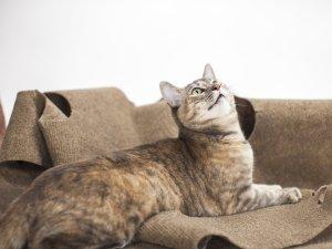 cat-picture-f5c39c93daa03f62c6eda4f68f3106dc0ff6d7cb-s1600-c85.jfif
